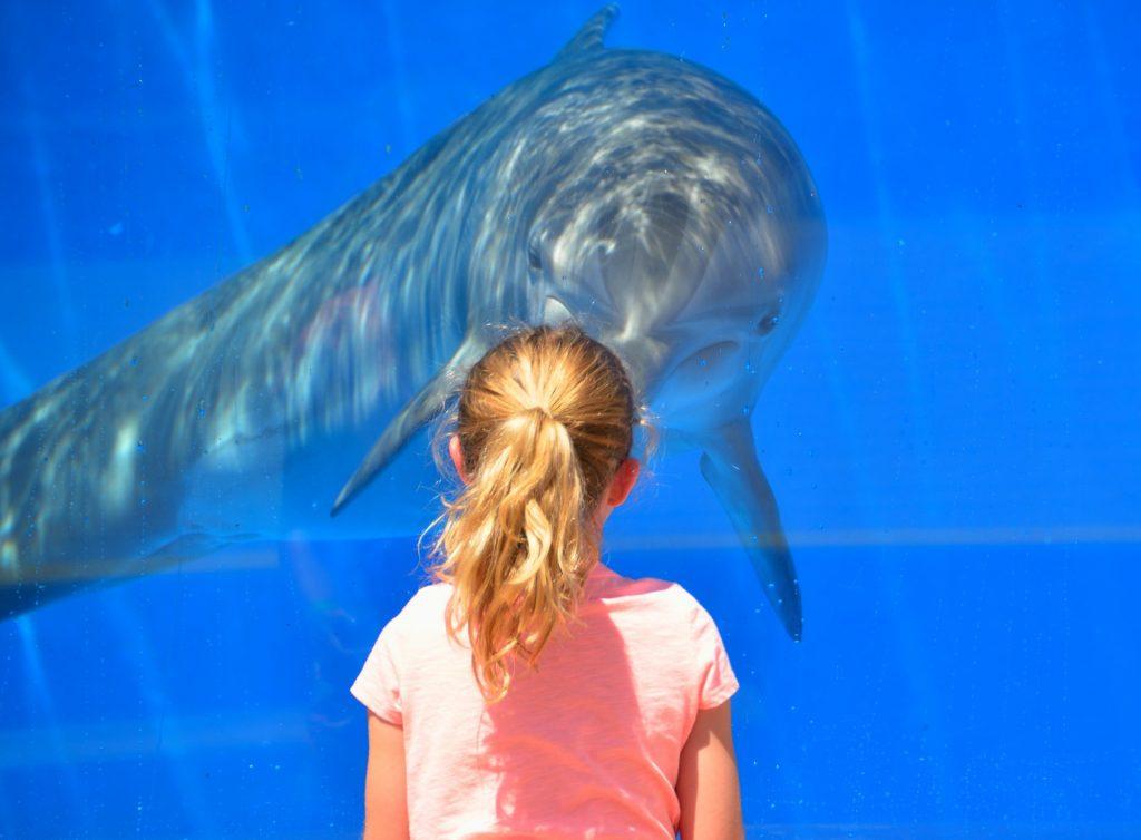 aquarium-girl-dolphin